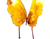 spring yellow brown and white butterfly original watercolour and ink painting
