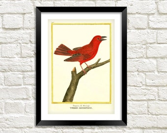 RED BIRD PRINT: Vintage Tanager Art Illustration Wall Hanging (A4 / A3)