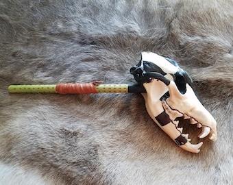 Coyote skull rattle