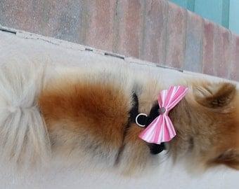By The Beach Dog Bow