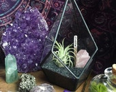 LOVE SPELL a geometric forged glass zen garden with raw rose quartz and airplant