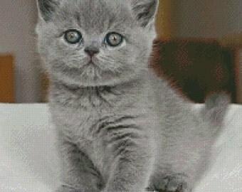 British Shorthair Cat Cross Stitch Pattern 002