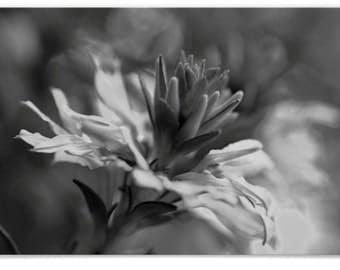 Beautiful Floral Macro Photograph in Black and White