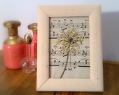 Love and Music: Pressed Queen Anne's Lace Flower Art on Antique Sheet Music
