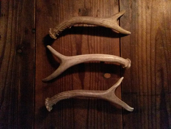 3 Antler Handles For Cabinet Doors And Drawers Dressers Gun