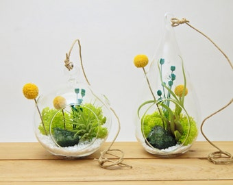 Small Air Plant Terrarium Kit ~ Wonky Wonderland / Teardrop, Round or Both ~You Pick