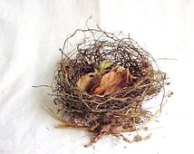 Real Bird's Nest - Very Small Size - Fine Roots and Twigs - Leaf Lined and Airy - Genuine Bird Home - Found Supply - Natural Architect
