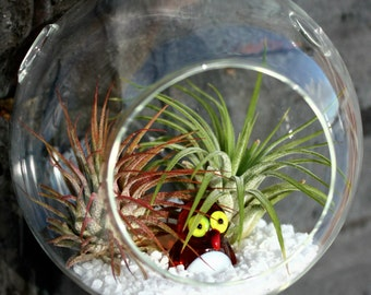 Fuego - Charming Mini Terrarium with Ionantha Air Plants - Your Choice: Penguin or Turtle