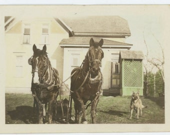 Vintage Snapshot Photo: Horses Hitched to Cultivator, Dog, Hand Tinted c1930s (69504)