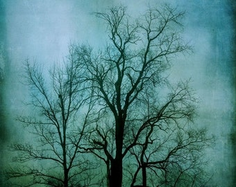 "SALE - Surreal Landscape Photograph, Fine Art Photography Print, Dark Teal Blue, Black, Trees, Foggy Landscape, 8x8 - 20x20, ""Into The Fog"""
