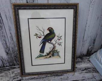 Large Vintage Colorful Parrot Bird Framed Print Wall Hanging Painting Drawing