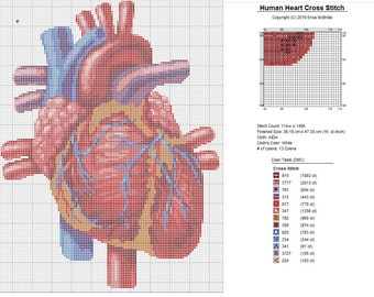 Human Heart X-Stitch Anatomical Detailed Realistic Cross Stitch Pattern