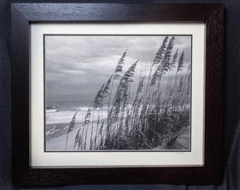 Framed Beach Grass 20 by 24
