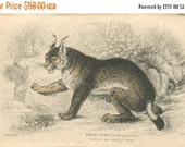 SALE Antique Hand Colored Steel Engraved 1800's Book Plate Print Jardine Natural History Library Vol XVI Mammalia Lions Tigers European Lynx