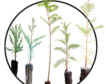Instant bonsai collection: redwoods of the world bundle
