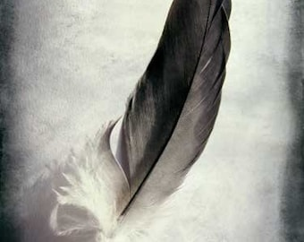 "Feather Photo, Feather Print, Nature Photography, Vintage, Feather Art, Romantic Photo, Fine Art Photography ""Feathered"""