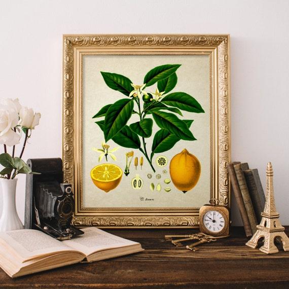Vintage Botanical Print Lemon Giclee Home Decor Antique Lemon