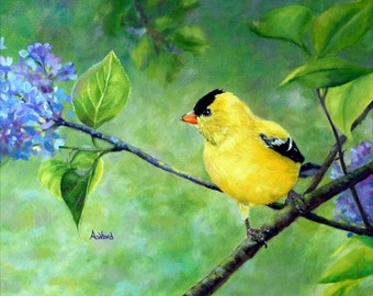 Among the lilacs, Goldfinch fine art paper print