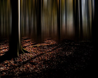 Fine Art Photographic Print - Autumn Wood