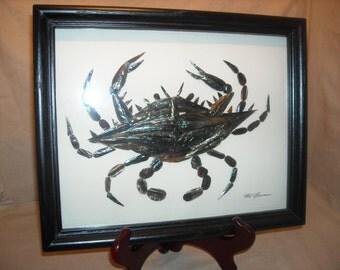 crab pen shell