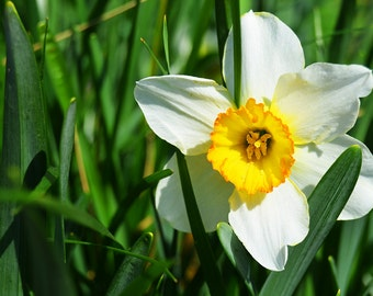 What Daffodil, Flower Photography, Nature Photography