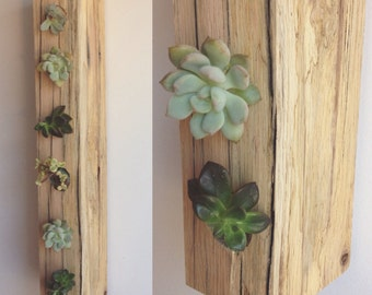 Vertical Succulent/Air Plant Planter