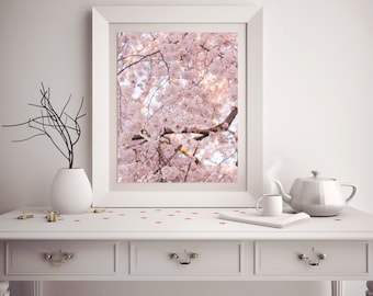 "Washington DC Cherry Blossom Photography, ""Pink Cherry Blossom"" Washington DC Print, Fine Art Photography, Affordable Wall Art"