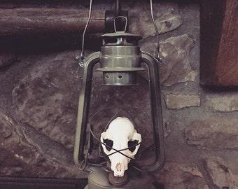 Mink skull lantern