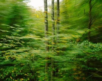 Abstract Photography - Trees in Motion - Nature Photo