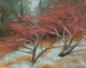 Red Branches, Snow