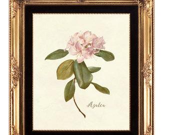 botanical print, printable artwork, azalea digital print, printable wall art, 8 x 10, floral print, digital floral print, botanical download