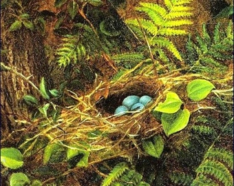 Still Life of a Robins nest by Fidelia Bridges-1896