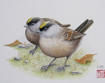 Golden-crowned Sparrow - original watercolor painting
