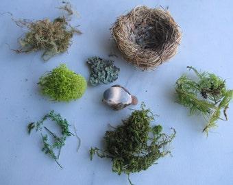 DIY Nest Decorate Your Own Nest Moss Nest Bird Nest