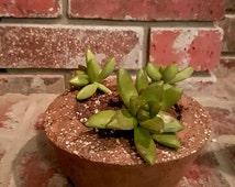 """Medium 6"""" Hypertufa succulent planter (1 planter)"""