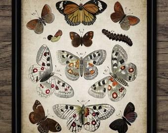 Vintage Butterfly Print - Antique Butterfly Bookplate Illustration - Entomology Digital Printable Art - Single Print #418 - INSTANT DOWNLOAD