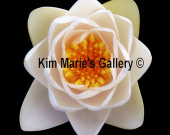 Mini White Water Lily