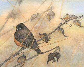Robin in Early Morning Light