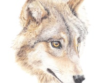 Timber Wolf - archival giclee print - A4 size