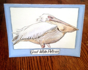 Great White Pelican card