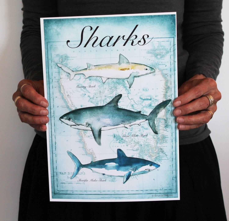 Shark Decor For Bedroom Shark Decor For Bedroom Nice Ideas 4moltqacom