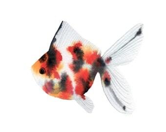 Watercolor Calico Fancy Goldfish Original Painting 5x7