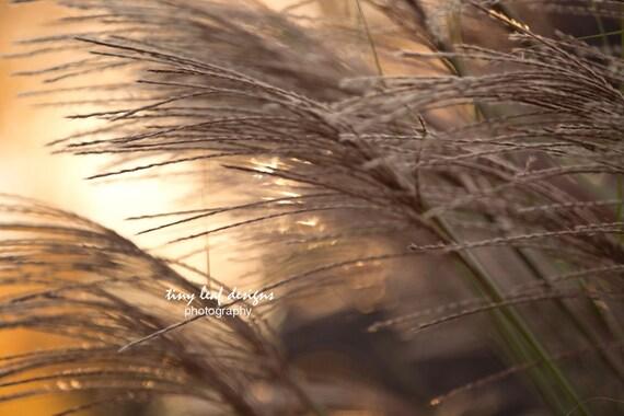 Sunstruck Grass - Original photography