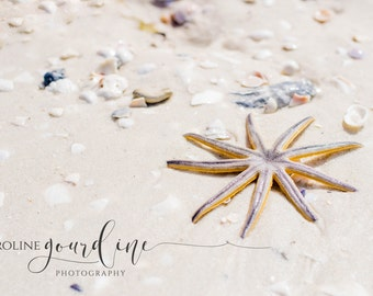 Fine Art Photography - Beach Starfish Photography - Digital Download