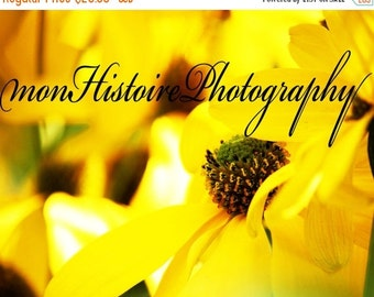 25% off Yellow Flower, Nature Photography
