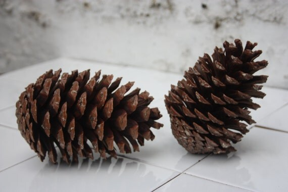Large maritime pine cones 100 natural pine cones for Large pine cones