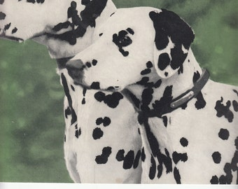 "Dog Print/1937 Two Beautiful Dalmatians/In Color/8"" X 10.5"""