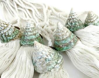 Two nautical curtain tie back, curtain holdback, beach decor, seashell curtain tiebacks, pyramid shells, green home decor, drapery tieback