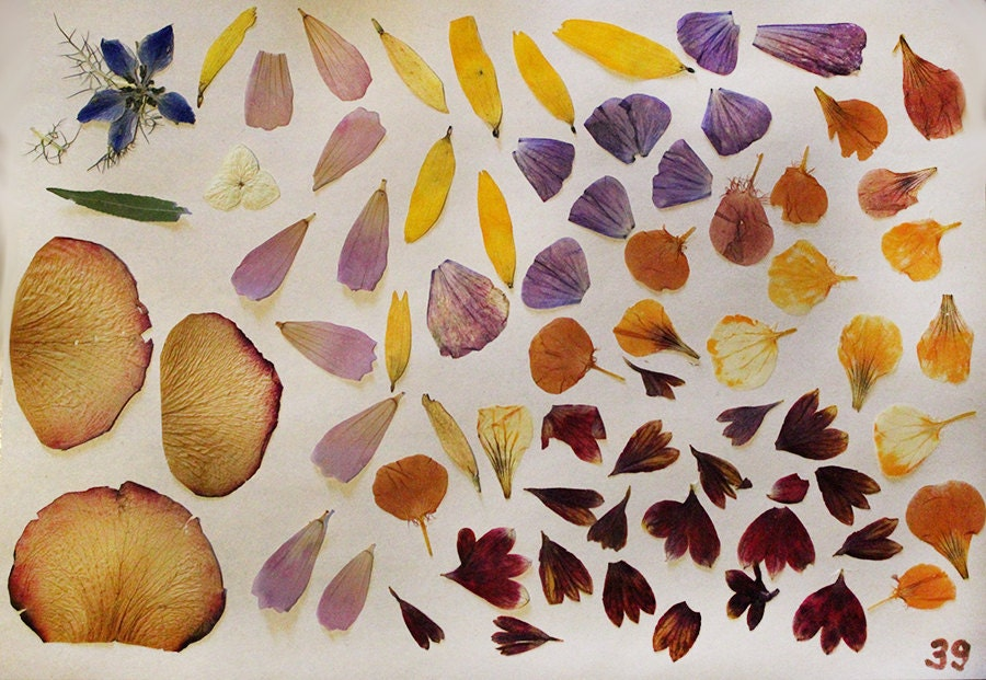 Flower supplies dry flower petals craft projects pressed - Crafts with flower petals ...