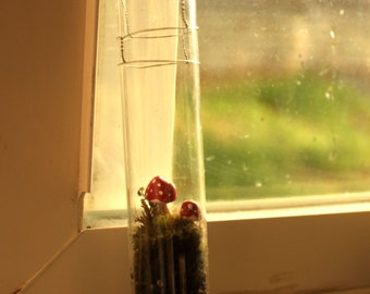 Test Tube Terrarium